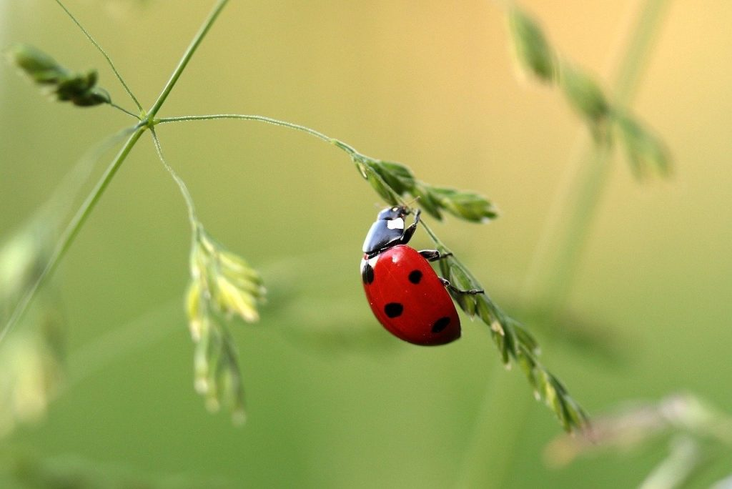 S'occuper à la campagne en capturant des insectes