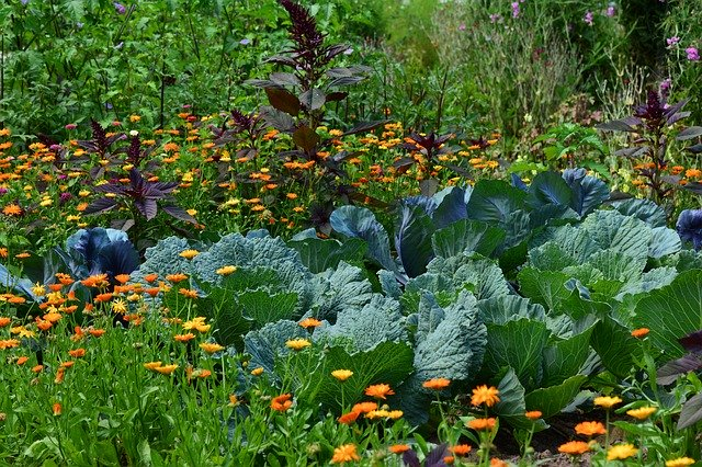 Jardin à la campagne