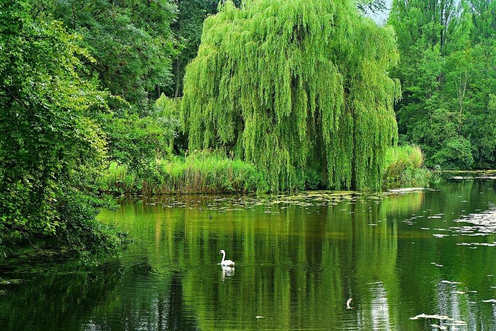 Les arbres apportent de l'ombre aux poissons