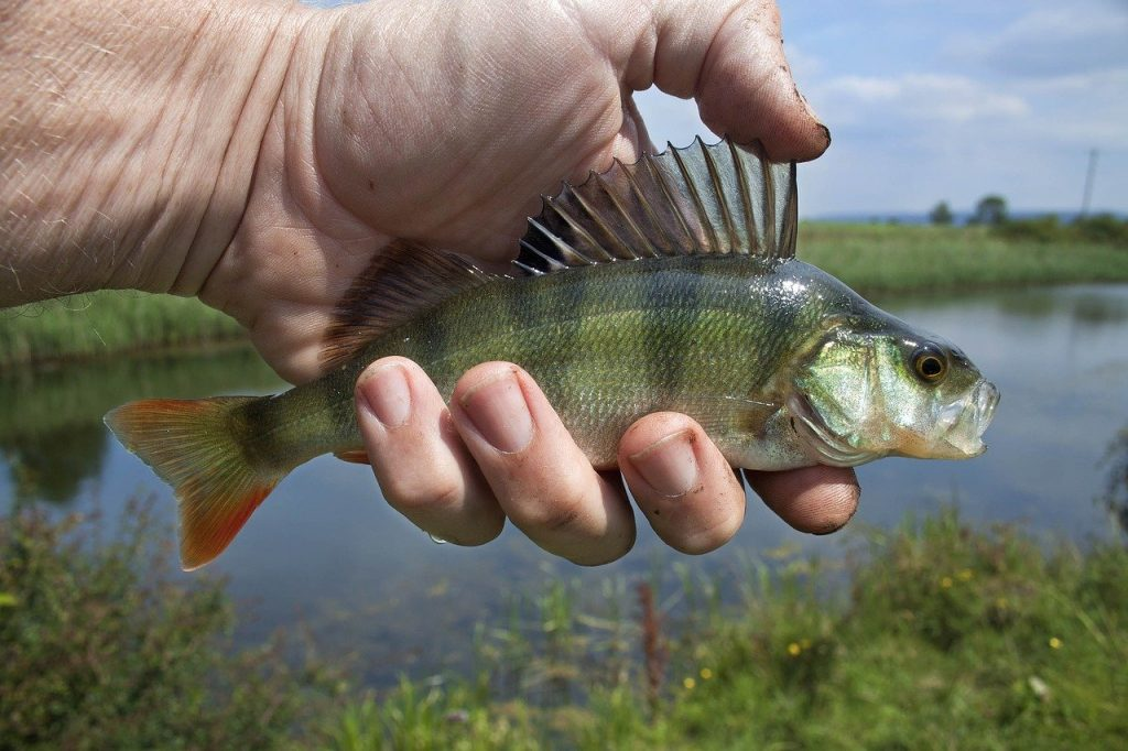 Pêcher des poissons