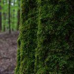 Survie en forêt savoir s'orienter