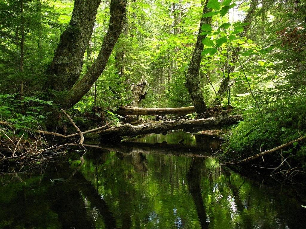 Survie en forêt: Trouver de l'eau