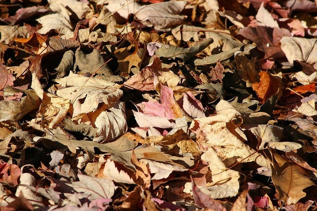 Etaler des feuilles mortes, paille, etc... C'est un portant pour transformer votre pelouse en potager sans retournement