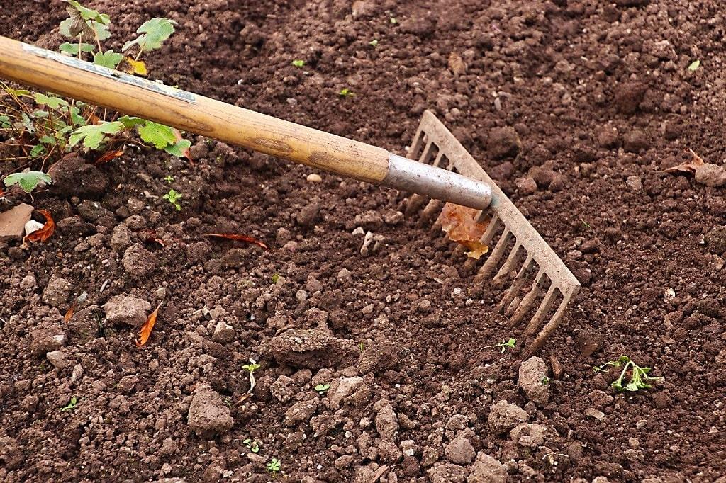 Retirer les feuilles mortes du sol