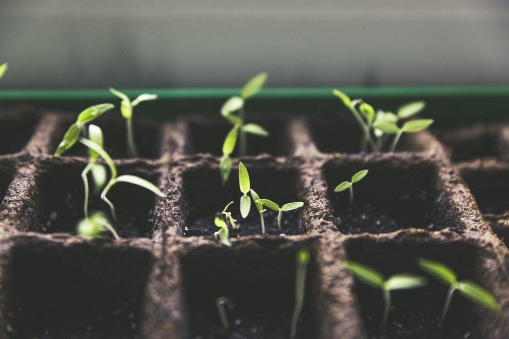 Cultiver sa propre nourriture pour devenir survivaliste