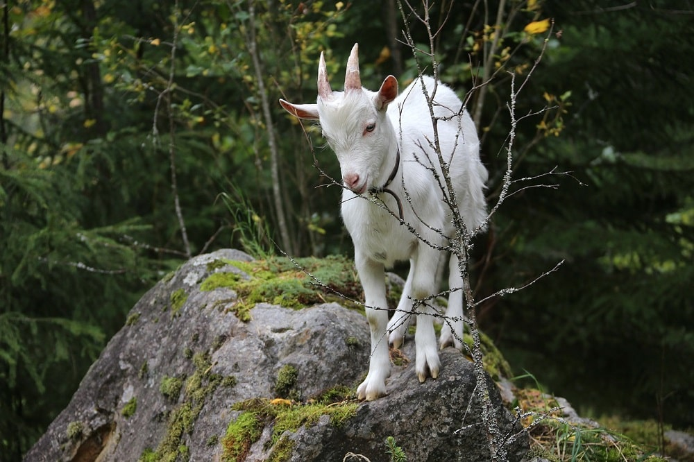 Faire un élevage en forêt