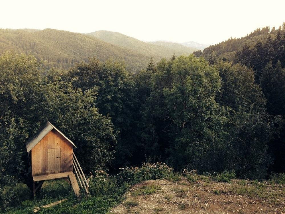 Cabane sans un arbre